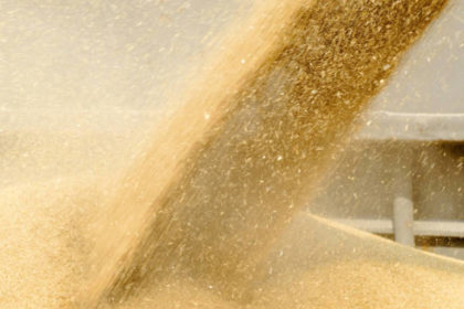 Grain dust