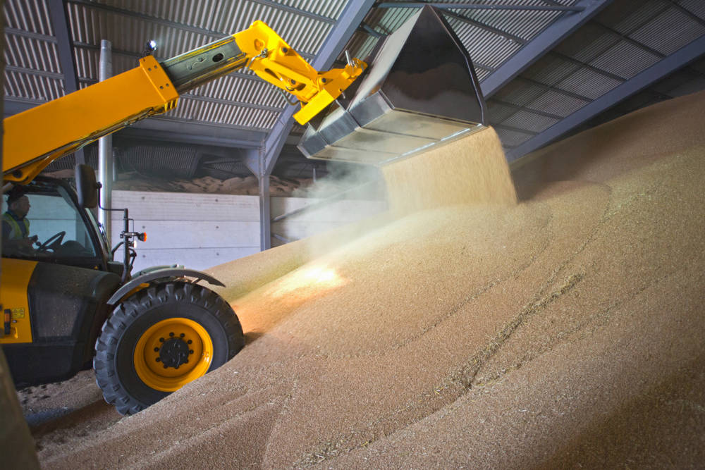 Truck unloading wheat into grain store